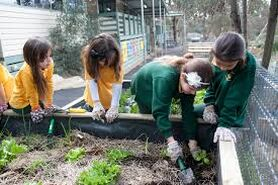 Public School Gardens: Good for Learning or a Waste of Time?