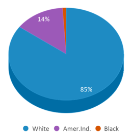 This chart display the percentage breakdown of students of all ethnic groups in Three Lakes Academy.